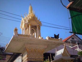 Yoga Rang Nok void cat on Buddhist shrine