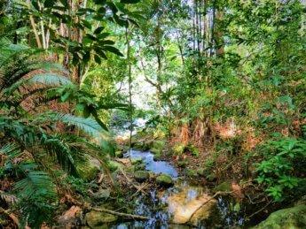 Penang national park meromictic lake turtle beach pantai keracut 14