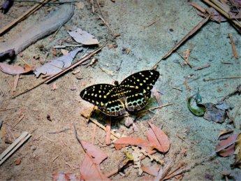 Penang national park meromictic lake turtle beach pantai keracut 33