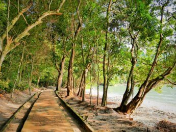 Penang national park meromictic lake turtle beach pantai keracut 4