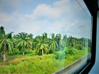 RMCO travel KTM train Malaysia window view palm oil plantation