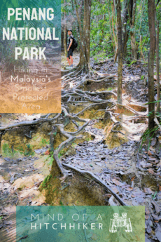 Hiking in Penang National Park is a great outdoorsy day trip when you find yourself in Malaysia. #Penang #GeorgeTown #PulauPinang #Malaysian #Malay #meromicticlake #meromictic #lake #Asia #SoutheastAsia #turtle #turtlebeach #hiking #rainforest #lakes #nature #forest #preserve #nationalpark #protectedarea