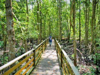 Kukup National park mangrove malaysia 2020