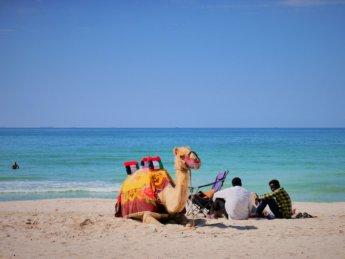 ajman corniche beach public camel