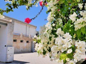 25 courtyard al mahatta museum hangar